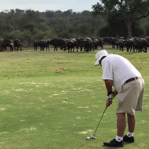 Buffaloes interrupt Lowveld Nomads day